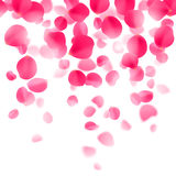 Red Rose Petals Background Royalty Free Stock Photos
