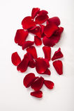 Red rose petals background Stock Images