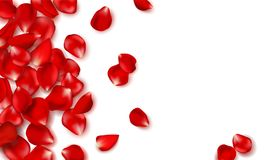 Red rose petals and beads on white background.Happy Valentines Day. Vector holiday illustration. Festive decoration. Wedding background Royalty Free Stock Photos
