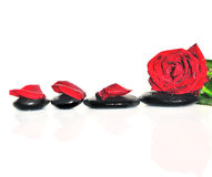 Red rose and petals on a black stones. Royalty Free Stock Image