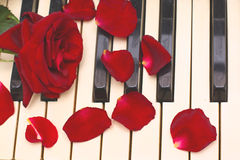 Red rose, petals, black and white piano keys. Background Stock Images