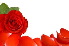 Red rose and petals border Royalty Free Stock Image