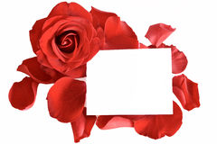 Red rose and petals with card Stock Images
