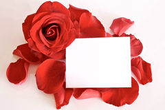 Red rose and petals with card and space for text. Red rose and petals with with card and space for text isolated on white background stock photography