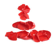 Red rose petals composition Stock Image