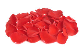 Red rose petals composition Stock Photos