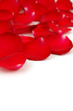 Red rose petals with copyspace Stock Photos
