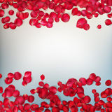 Red rose petals. EPS 10 Royalty Free Stock Photos
