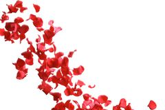 Red rose petals falling royalty free stock photo