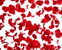 Red rose petals falling royalty free stock images