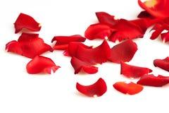 Red rose petals. Rose red flower love romance petals petal stock photos