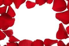 Red rose petals frame border, white copy space Stock Images