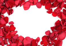 Red rose petals frame Stock Photography