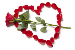 Red rose petals in heart shape with rose Royalty Free Stock Photography