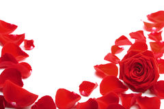 Red rose petals isolated Stock Photos