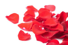 Red rose petals isolated Royalty Free Stock Photos