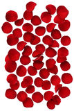 Red rose petals isolated on white background Stock Photography
