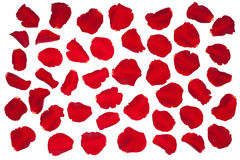 Red rose petals. Royalty Free Stock Photography