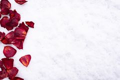 Red rose petals lie on the snow. Red rose petals lying on the snow. Macro stock photography
