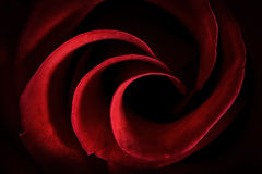 Red Rose Petals Macro - Abstract Stock Image