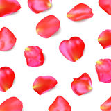 Red rose petals. Realistic vector. Red rose petals isolated on white background. Realistic vector illustration Stock Photos