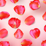 Red rose petals. Realistic vector. Red rose petals on pink background. Realistic vector illustration Stock Photo
