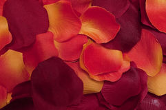 Red rose petals. Romantic background Stock Photography