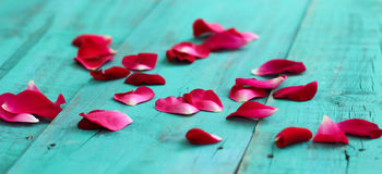 Red rose petals scattered on antique teal blue wooden background. Red rose petals scattered on antique green weathered wood floor boards Stock Photography