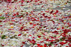 Red rose petals scattered on the pavement. The Red rose petals scattered on the pavement Royalty Free Stock Photo