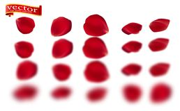 Red rose petals set, isolated on white, vector illustration. Red rose petals vector high detail. royalty free illustration