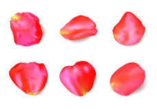 Red rose petals set. Realistic vector Royalty Free Stock Photos