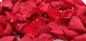 Red rose petals Stock Photography
