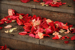 Red rose petals on stone stairs Stock Images