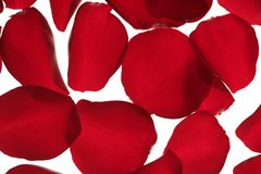 Red rose petals texture background Stock Photos