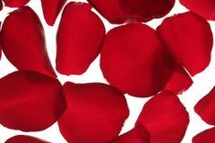 Red rose petals texture background Stock Photos