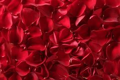 Red rose petals texture background. Transparent flowers Stock Photos