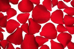 Red rose petals texture background Stock Photography