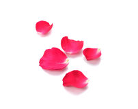 Red rose petals on white background stock photography