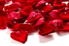 Red rose petals on a white background Royalty Free Stock Photography