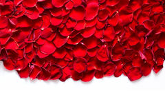 Red rose petals on white background. Stock Photography