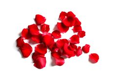 Red rose petals on white background. Top view stock photo
