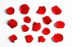 Red rose petals on white background, top view stock photos