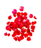 Red rose petals on white background. Royalty Free Stock Image