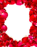 Red rose petals on white background. Stock Images