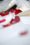 Red rose petals on white cloth. A closeup of red rose petals, scattered on white cloth. Focus is on a single petal towards the top Royalty Free Stock Photos