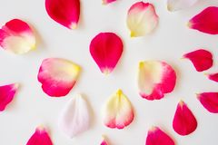 Red rose petals on white. Background stock images