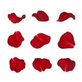 Red rose petals  on white. Red rose petals in vector  on white Stock Image