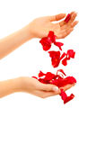 Red rose petals in woman's hand isolated Stock Images