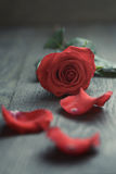 Red rose with petals on wood table Royalty Free Stock Photography