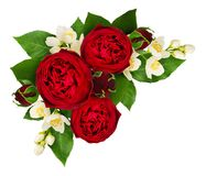 Red rose and philadelphus flowers composition. Isolated on white background. Top view. Flat lay Royalty Free Stock Images